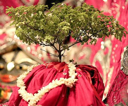 तुलसी पूजन के लिए श्रील प्रभुपाद के निर्देश